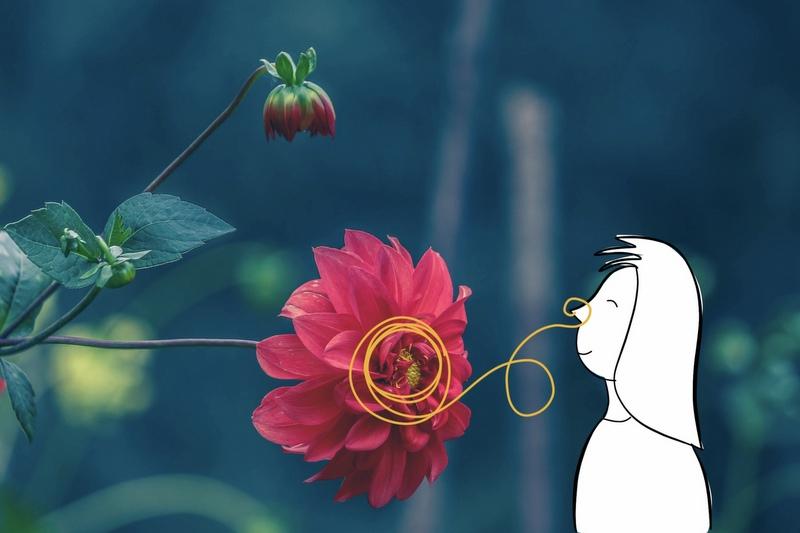 flower-800px